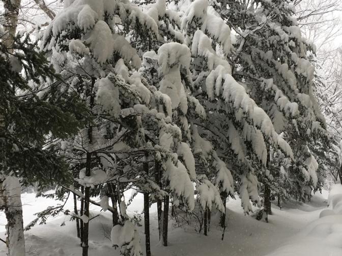 雪で重そう
